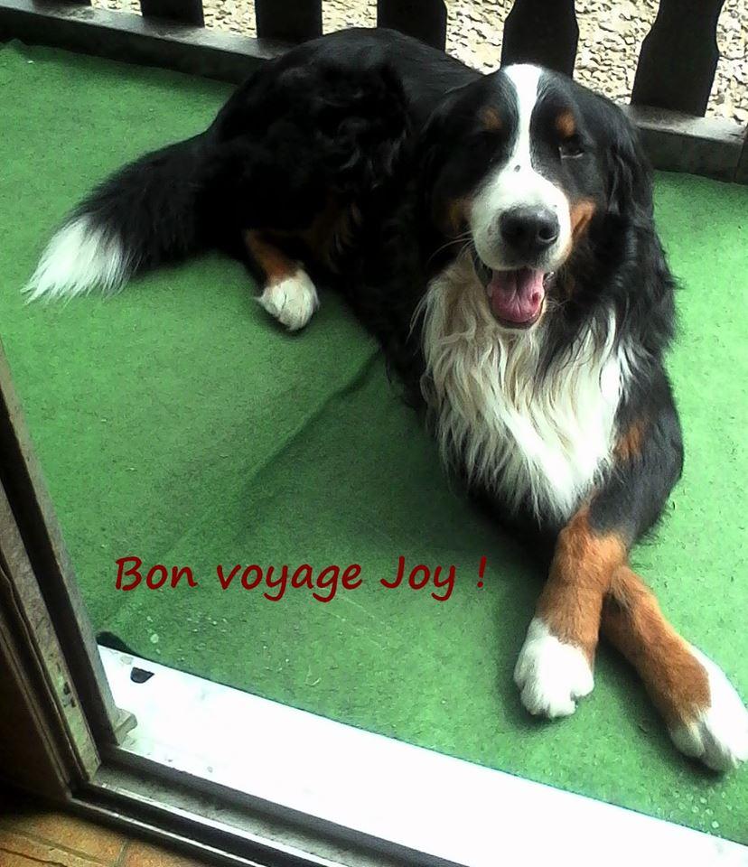 Au revoir Joy :-(