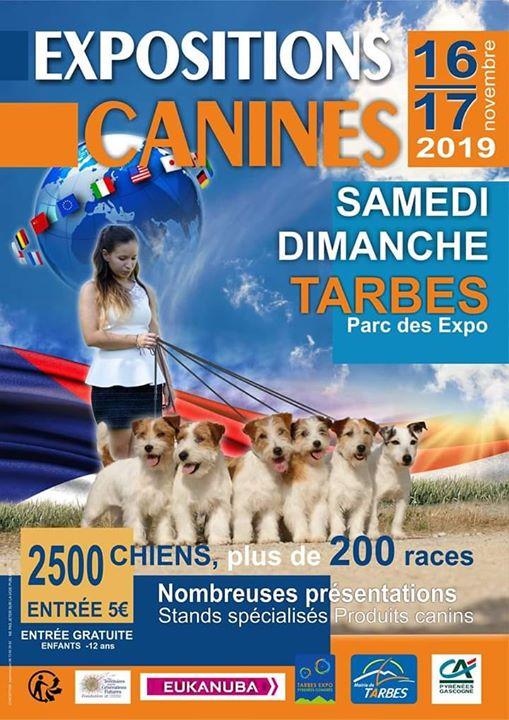Exposition Canine de Tarbes