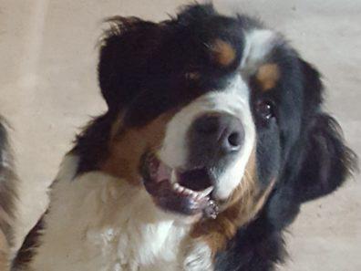 OLLY – A adopter avec NEMO – EST RESERVEE!